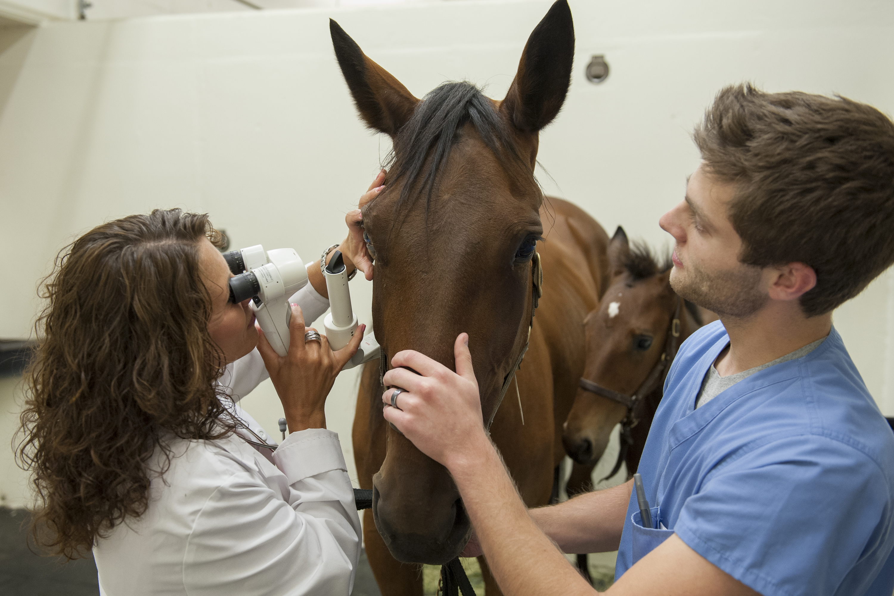 Veterinary medicine student with horse